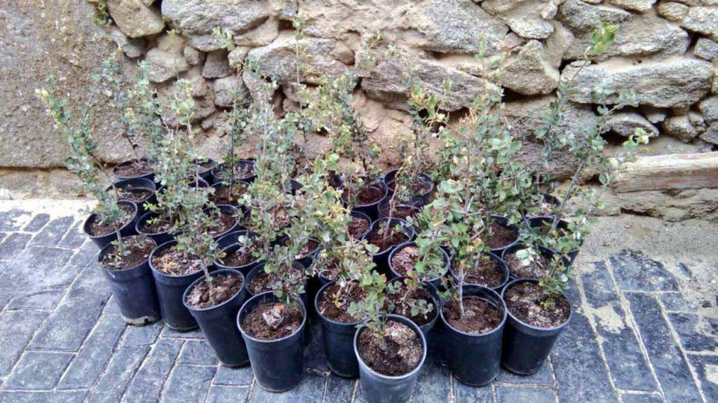 post plántalo, Plántalo y Handmade Beauty: unidos para reforestar la Sierra de Gredos