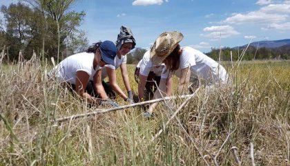 Portada del post plántalo, Plántalo y Handmade Beauty: unidos para reforestar la Sierra de Gredos