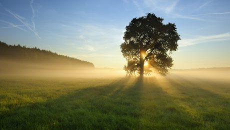 Portada del post plántalo, nuestra conexión con los árboles
