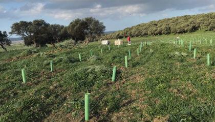 Reforestación Plántalo